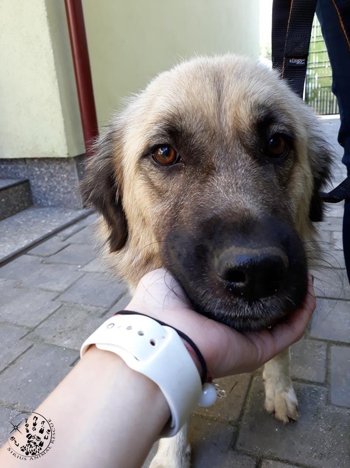 I-au furat puiutii – Metoda de control al populatiei canine in Romania lui 2018
